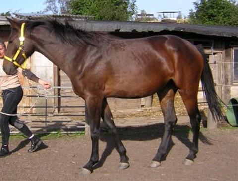 Das Leutstettener Pferd